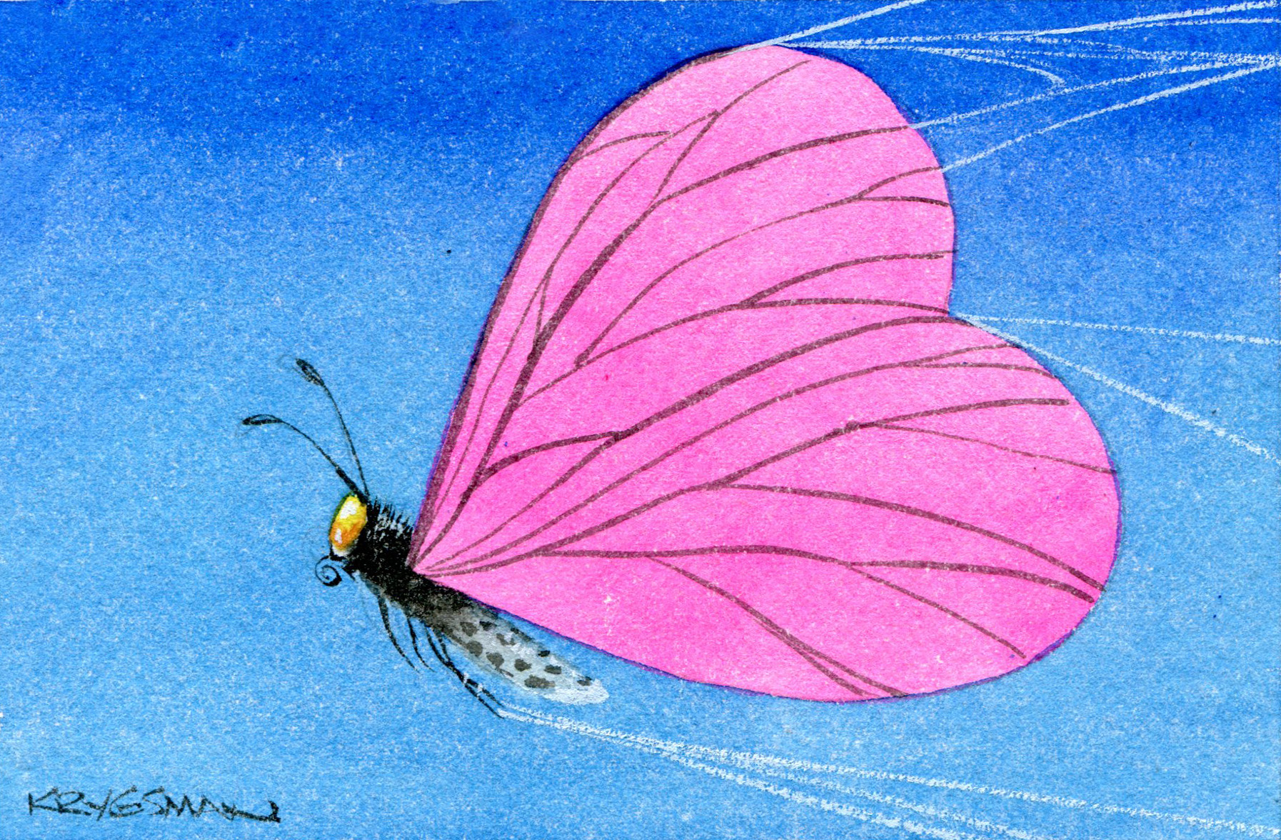 OZ Life- Ostrow col. Butterfly with heart shaped wings breaking spider web. Artwork by Sturt Krygsman.